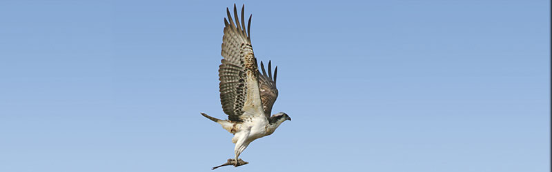 THE RAPTORS OF ANDALUCIA